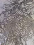 unformed dragons